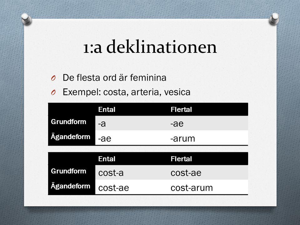 1:a deklinationen O De flesta ord är feminina O Exempel: costa, arteria, vesica EntalFlertal Grundform -a-ae Ägandeform -ae-arum EntalFlertal Grundfor