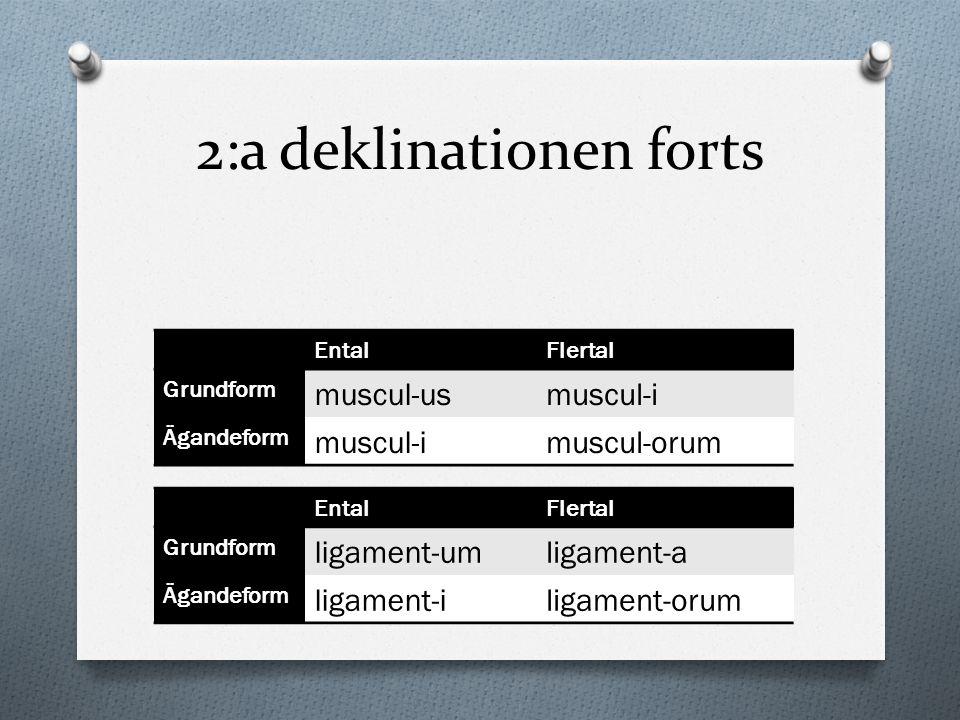 2:a deklinationen forts EntalFlertal Grundform muscul-usmuscul-i Ägandeform muscul-imuscul-orum EntalFlertal Grundform ligament-umligament-a Ägandefor