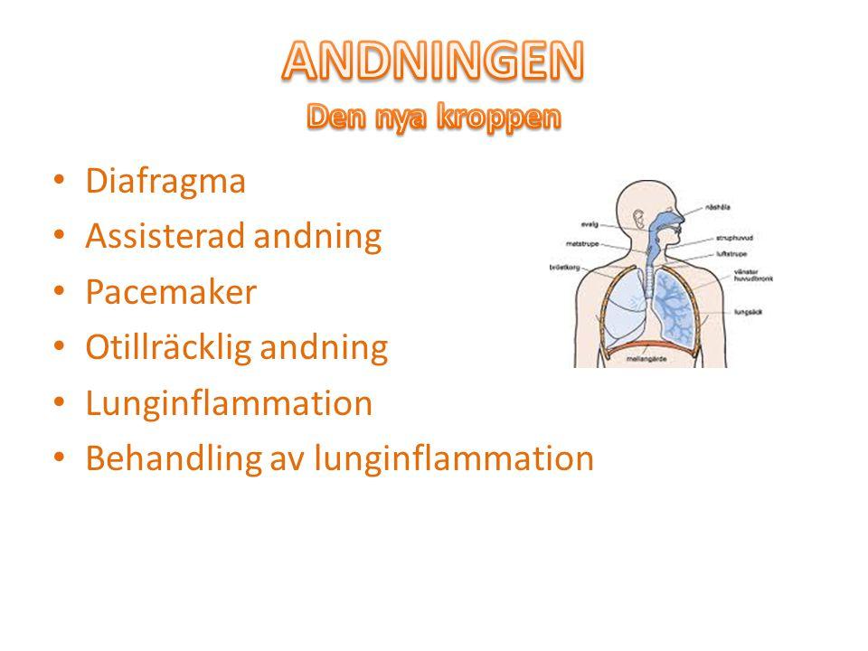 Diafragma Assisterad andning Pacemaker Otillräcklig andning Lunginflammation Behandling av lunginflammation
