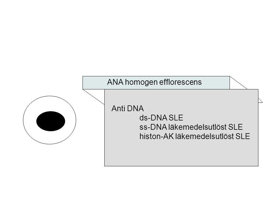ANA homogen efflorescens Anti DNA ds-DNA SLE ss-DNA läkemedelsutlöst SLE histon-AK läkemedelsutlöst SLE