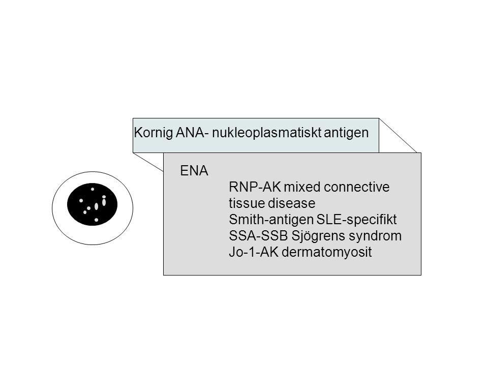 Kornig ANA- nukleoplasmatiskt antigen ENA RNP-AK mixed connective tissue disease Smith-antigen SLE-specifikt SSA-SSB Sjögrens syndrom Jo-1-AK dermatom
