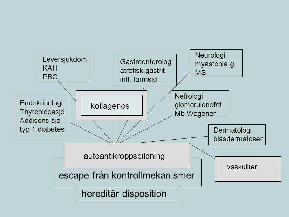Leukocytantikroppar = ANCA P-ANCA = perinukleär efflorescens = MPO-AK Vaskulit-AK, mindre specifik för Mb Wegener C-ANCA = cytoplasmatisk efflorescens =proteinas3- AK (PR3-ANCA) antikroppen är specifik för Mb Wegener men aktivitetsberoende