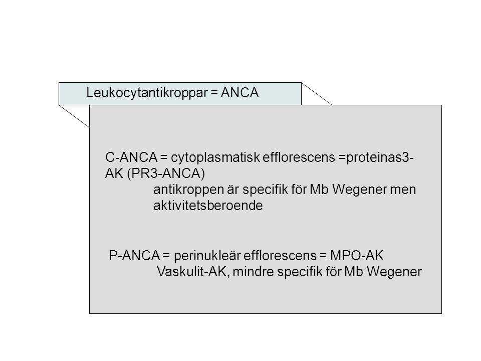 Leukocytantikroppar = ANCA P-ANCA = perinukleär efflorescens = MPO-AK Vaskulit-AK, mindre specifik för Mb Wegener C-ANCA = cytoplasmatisk efflorescens