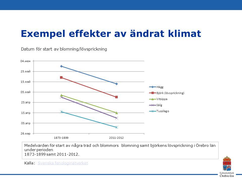 Exempel effekter av ändrat klimat Datum för start av blomning/lövsprickning Medelvärden för start av några träd och blommors blomning samt björkens lö