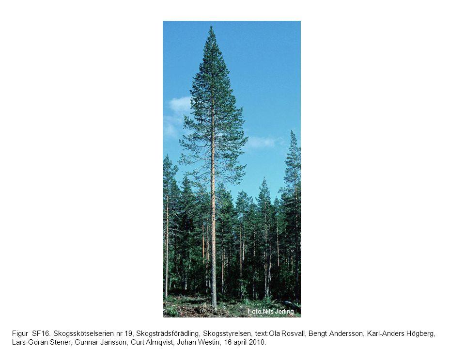 Figur SF16. Skogsskötselserien nr 19, Skogsträdsförädling, Skogsstyrelsen, text:Ola Rosvall, Bengt Andersson, Karl-Anders Högberg, Lars-Göran Stener,
