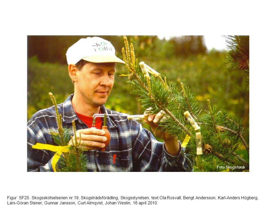 Figur SF25. Skogsskötselserien nr 19, Skogsträdsförädling, Skogsstyrelsen, text:Ola Rosvall, Bengt Andersson, Karl-Anders Högberg, Lars-Göran Stener,