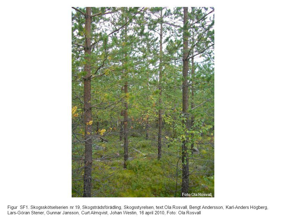 Figur SF1. Skogsskötselserien nr 19, Skogsträdsförädling, Skogsstyrelsen, text:Ola Rosvall, Bengt Andersson, Karl-Anders Högberg, Lars-Göran Stener, G