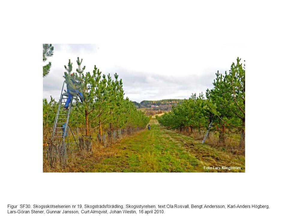 Figur SF30. Skogsskötselserien nr 19, Skogsträdsförädling, Skogsstyrelsen, text:Ola Rosvall, Bengt Andersson, Karl-Anders Högberg, Lars-Göran Stener,