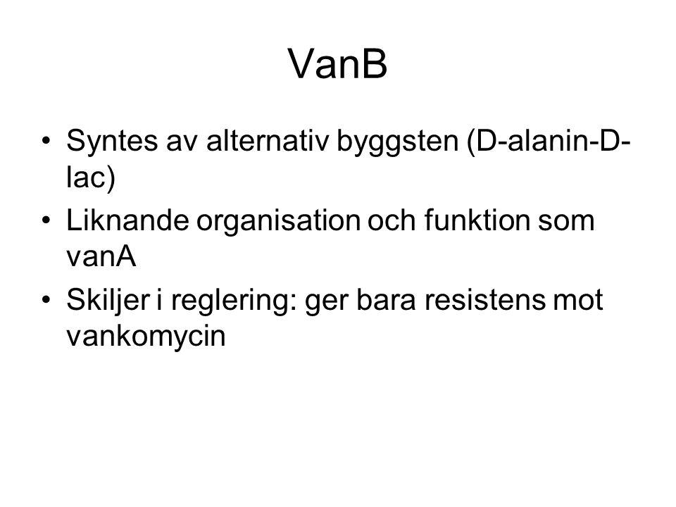 VanB Syntes av alternativ byggsten (D-alanin-D- lac) Liknande organisation och funktion som vanA Skiljer i reglering: ger bara resistens mot vankomycin