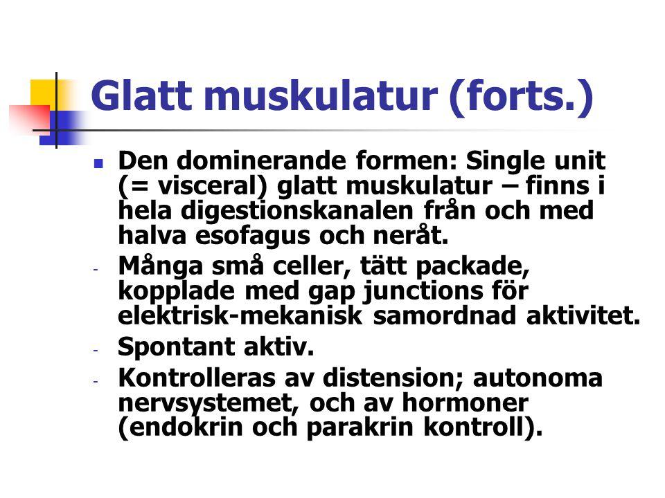 Glatt muskulatur (forts.) Den dominerande formen: Single unit (= visceral) glatt muskulatur – finns i hela digestionskanalen från och med halva esofag