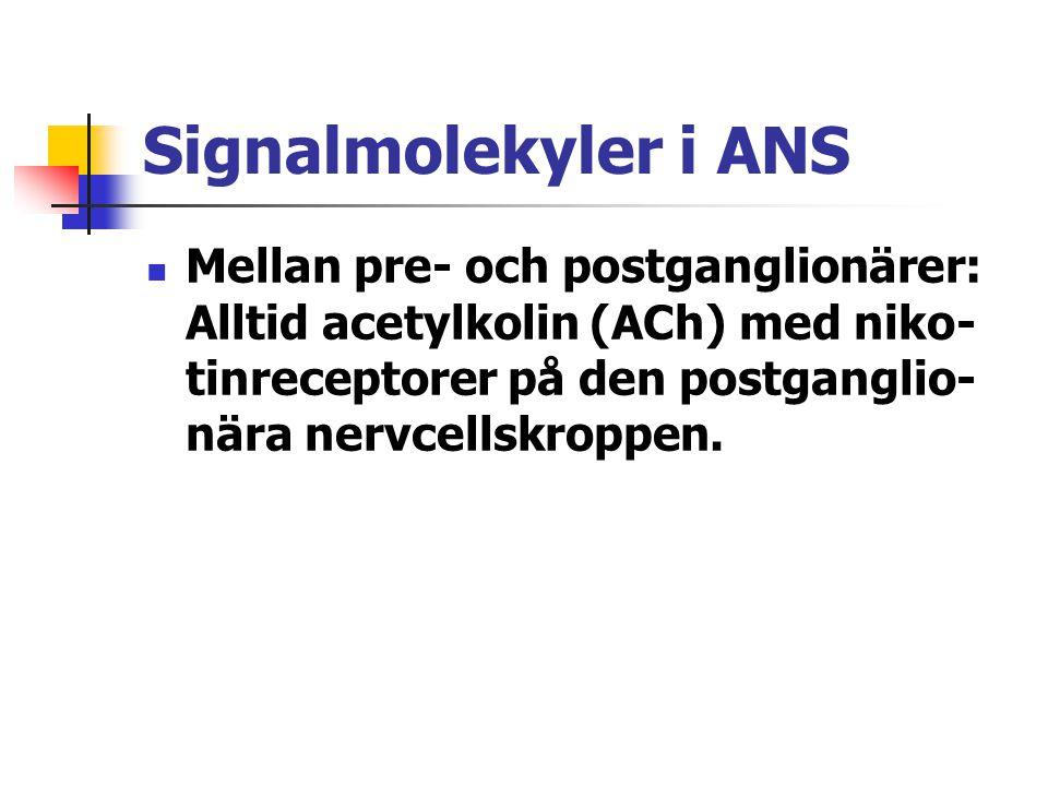 Signalmolekyler i ANS Mellan pre- och postganglionärer: Alltid acetylkolin (ACh) med niko- tinreceptorer på den postganglio- nära nervcellskroppen.