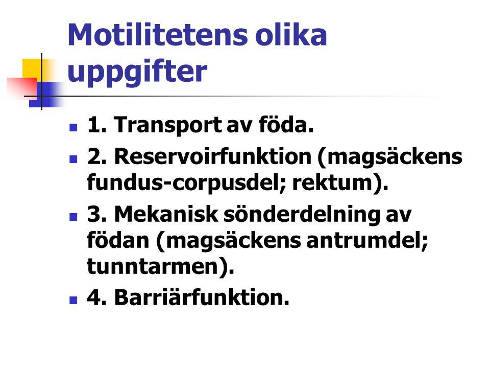 Motilitetens olika uppgifter 1. Transport av föda. 2. Reservoirfunktion (magsäckens fundus-corpusdel; rektum). 3. Mekanisk sönderdelning av födan (mag