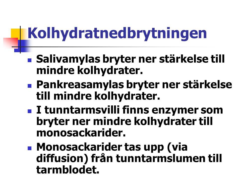 Kolhydratnedbrytningen Salivamylas bryter ner stärkelse till mindre kolhydrater. Pankreasamylas bryter ner stärkelse till mindre kolhydrater. I tunnta