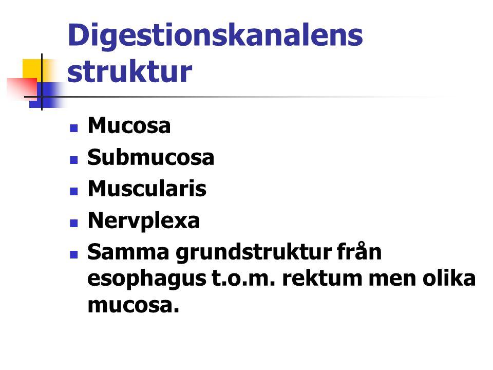Digestionskanalens struktur Mucosa Submucosa Muscularis Nervplexa Samma grundstruktur från esophagus t.o.m. rektum men olika mucosa.