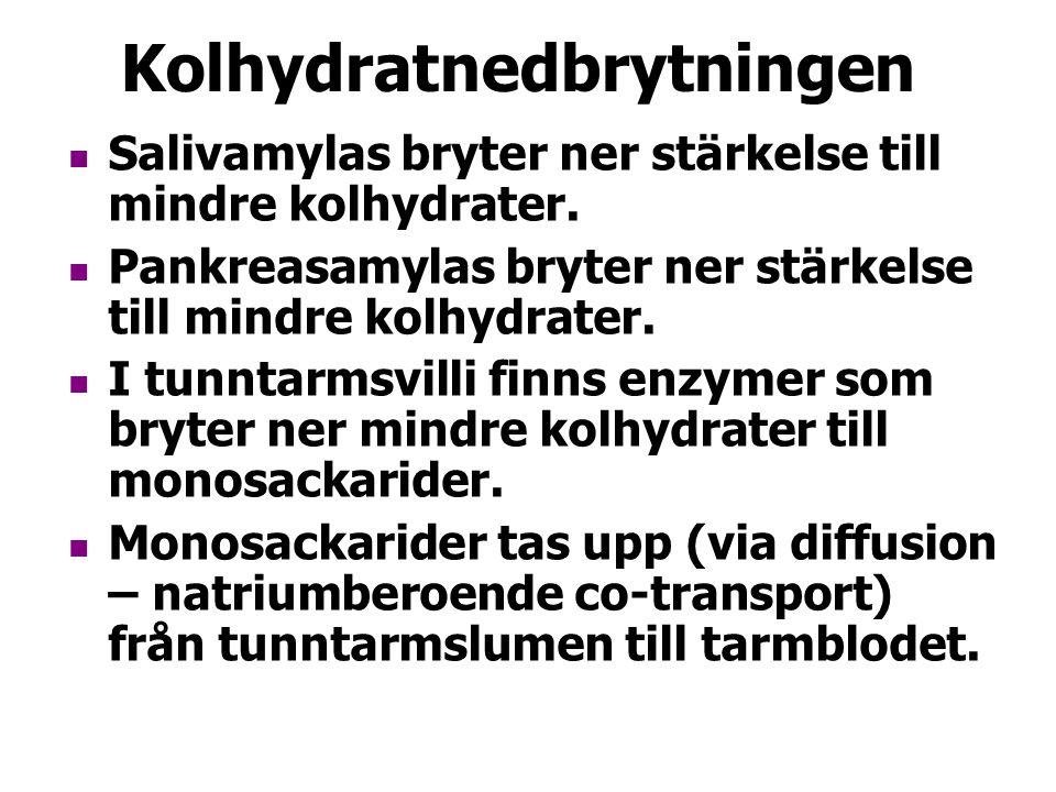 Kolhydratnedbrytningen Salivamylas bryter ner stärkelse till mindre kolhydrater.