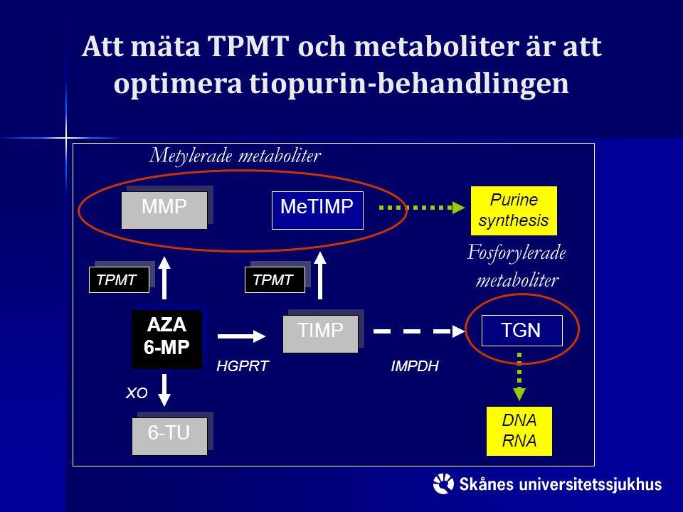 Att mäta TPMT och metaboliter är att optimera tiopurin-behandlingen AZA 6-MP TIMP MMP 6-TU TPMT XO HGPRT MeTIMP TGN IMPDH TPMT DNA RNA Purine synthesi
