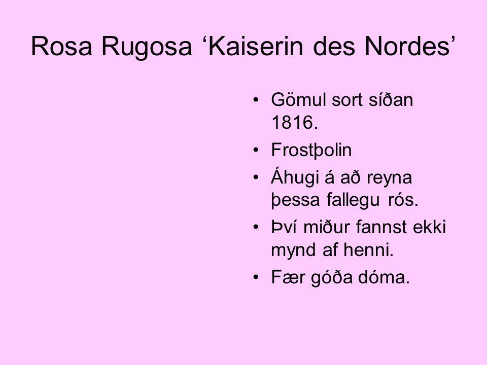 Rosa Rugosa 'Kaiserin des Nordes' Gömul sort síðan 1816. Frostþolin Áhugi á að reyna þessa fallegu rós. Því miður fannst ekki mynd af henni. Fær góða