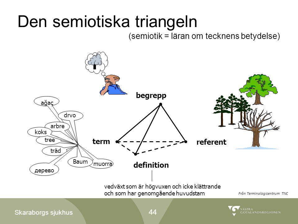 Skaraborgs sjukhus Den semiotiska triangeln (semiotik = läran om tecknens betydelse) begrepp referent vedväxt som är högvuxen och icke klättrande och