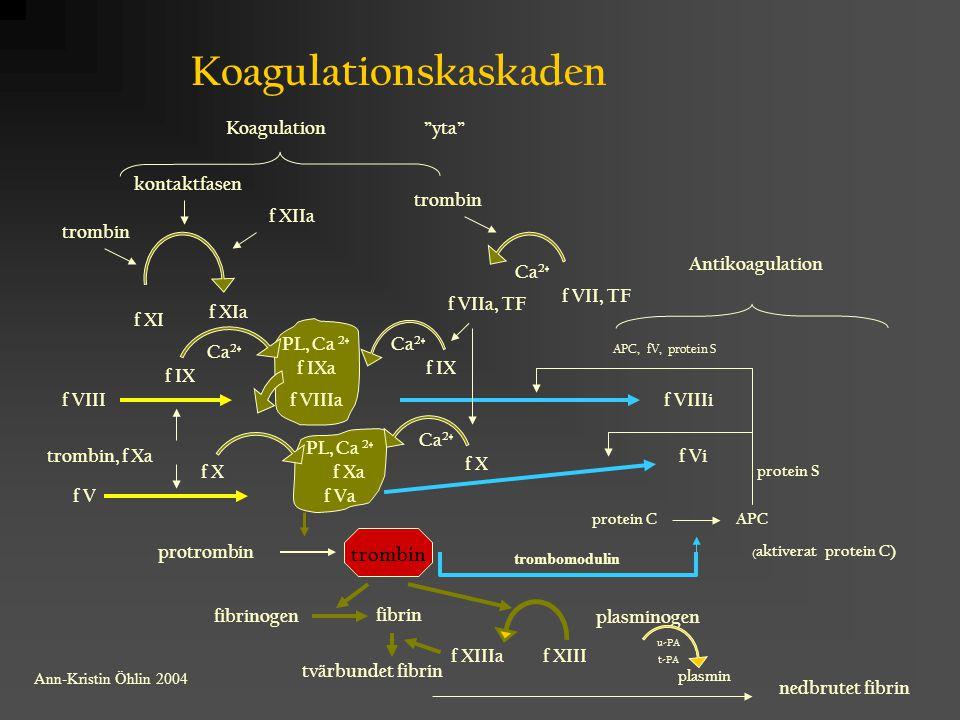 """Koagulationskaskaden kontaktfasen trombin f XIIa """"yta"""" f XI f XIa trombin Ca 2+ f VIIa, TF f IX f IXa Ca 2+ f X f Xa protrombin trombin fibrinogen fib"""
