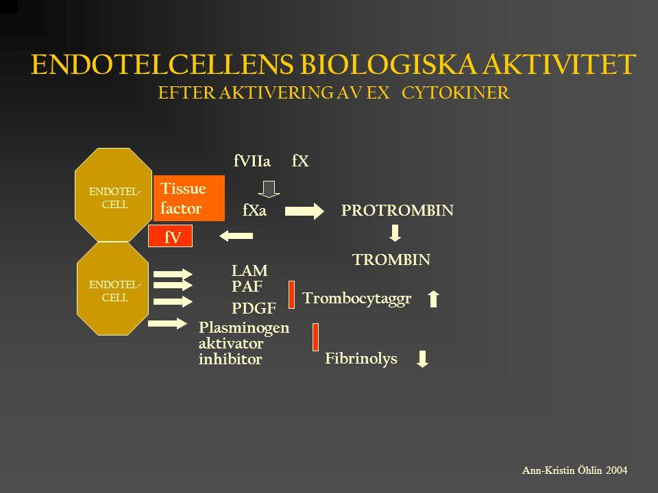 Tissue factor ENDOTELCELLENS BIOLOGISKA AKTIVITET EFTER AKTIVERING AV EX CYTOKINER fV fVIIafX fXa LAM PAF PDGF Plasminogen aktivator inhibitor PROTROM