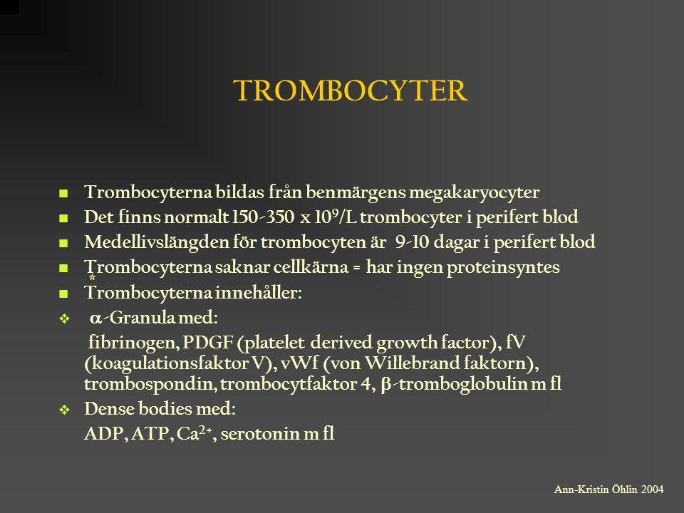 ADHESION (GPla, GPIb, vWf) TROMBOCYTENS ROLL I DEN PRIMÄRA HEMOSTASEN KÄRLSKADA FORMFÖRÄNDRING =AKTIVERING SEROTONIN ADP TROMBOXAN A 2 AKTIVERING AV NYA TROMBOCYTER AGGREGATION (GPIIb, TROMBOSPONDIN) Ann-Kristin Öhlin 2004