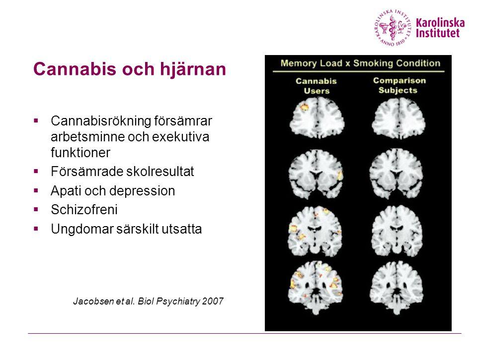 Cannabis och hjärnan  Cannabisrökning försämrar arbetsminne och exekutiva funktioner  Försämrade skolresultat  Apati och depression  Schizofreni 