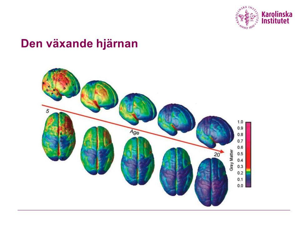Ungdomars ökade risk Hardin & Ernst: J Addict Med 2009
