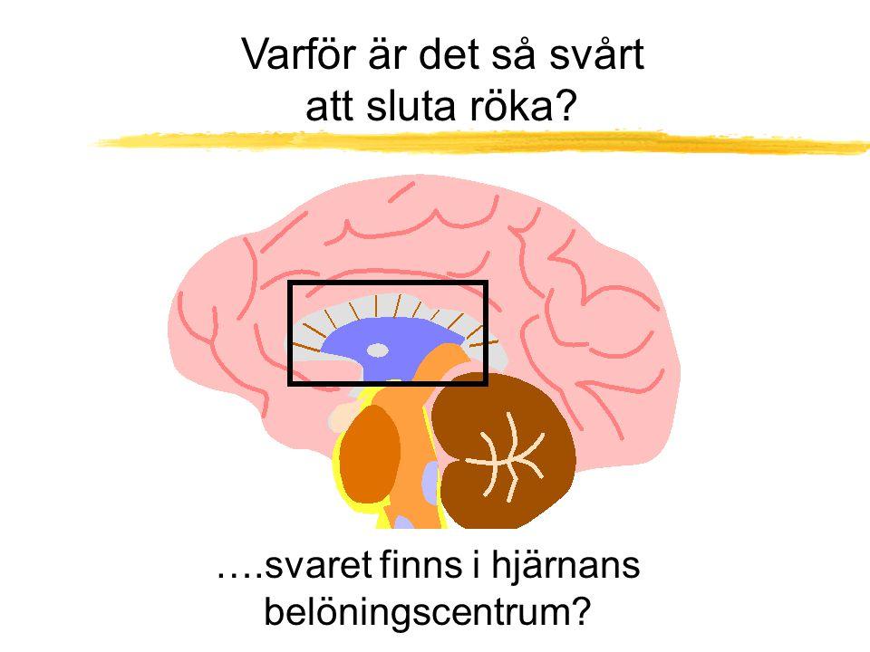 Varför är det så svårt att sluta röka? ….svaret finns i hjärnans belöningscentrum?