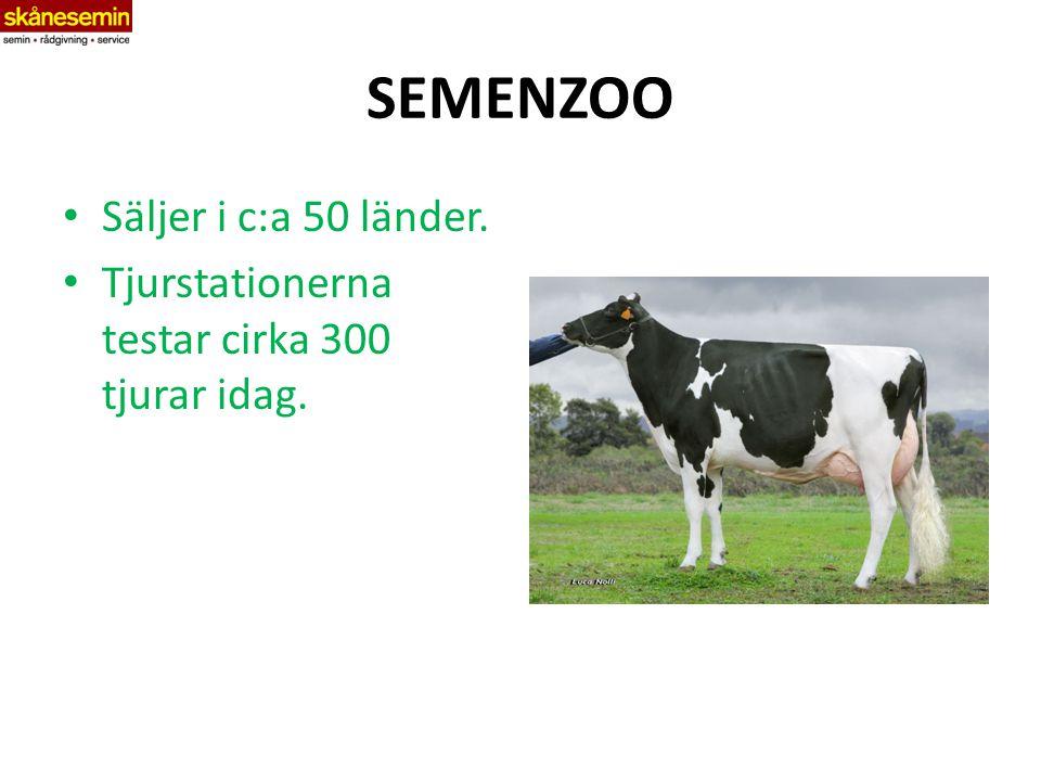 SEMENZOO Säljer i c:a 50 länder. Tjurstationerna testar cirka 300 tjurar idag.
