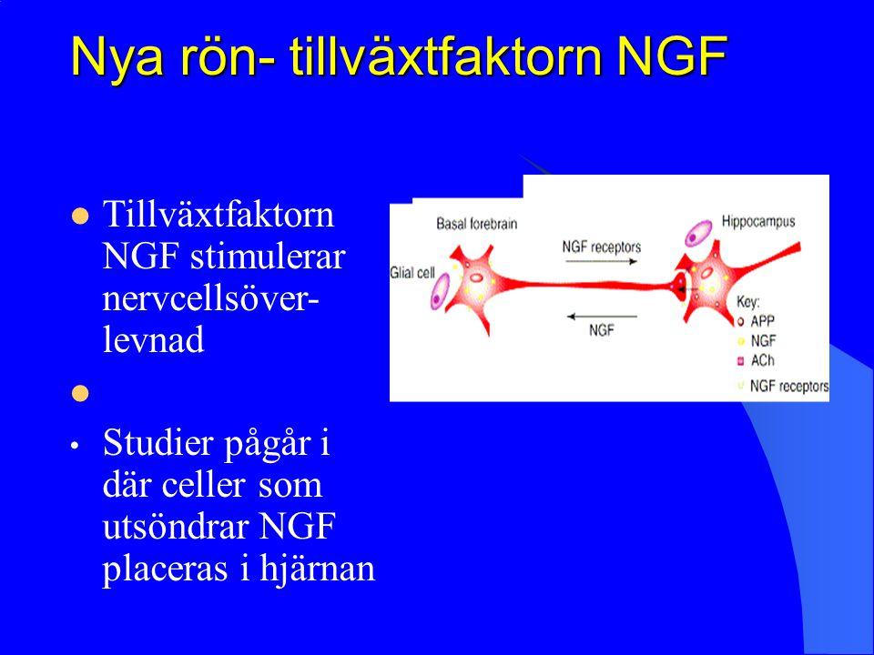 Nya rön- tillväxtfaktorn NGF Tillväxtfaktorn NGF stimulerar nervcellsöver- levnad Studier pågår i där celler som utsöndrar NGF placeras i hjärnan