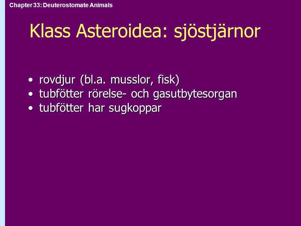 Chapter 33: Deuterostomate Animals Klass Asteroidea: sjöstjärnor rovdjur (bl.a. musslor, fisk)rovdjur (bl.a. musslor, fisk) tubfötter rörelse- och gas