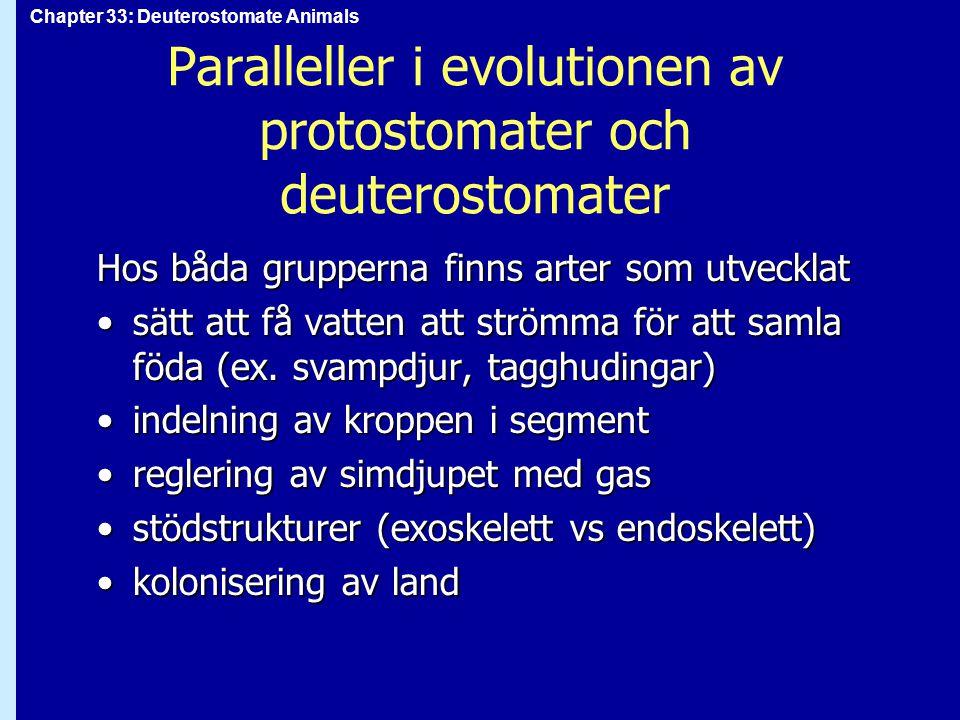 Chapter 33: Deuterostomate Animals Klass Mammalia: däggdjur Utvecklades från tidiga däggdjursliknande reptilerUtvecklades från tidiga däggdjursliknande reptiler Särdrag:Särdrag: intern befruktning och embryonalutveckling i livmodern (undantag: kloakdjur) intern befruktning och embryonalutveckling i livmodern (undantag: kloakdjur) mjölkkörtlar mjölkkörtlar specialiserade tänder (beroende på diet) specialiserade tänder (beroende på diet) hår hår svettkörtlar svettkörtlar hjärta med fyra kammare hjärta med fyra kammare