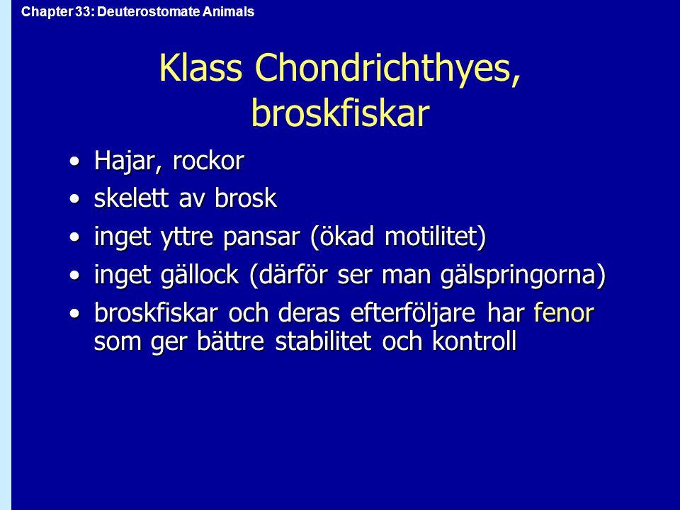 Chapter 33: Deuterostomate Animals Klass Chondrichthyes, broskfiskar Hajar, rockorHajar, rockor skelett av broskskelett av brosk inget yttre pansar (ö