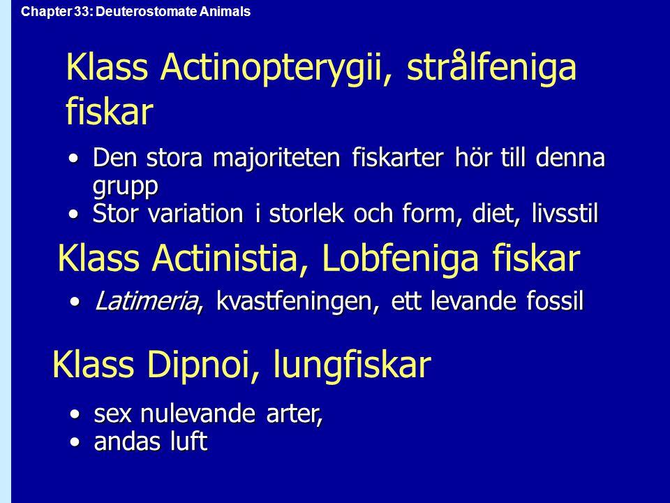 Chapter 33: Deuterostomate Animals Klass Actinopterygii, strålfeniga fiskar Den stora majoriteten fiskarter hör till denna gruppDen stora majoriteten