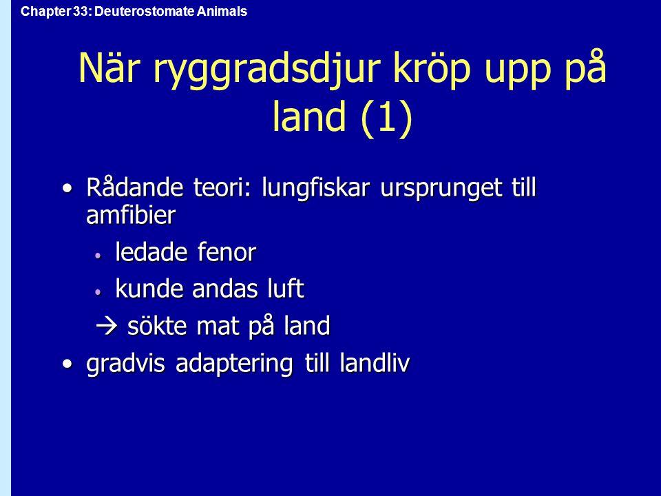 Chapter 33: Deuterostomate Animals När ryggradsdjur kröp upp på land (1) Rådande teori: lungfiskar ursprunget till amfibierRådande teori: lungfiskar u