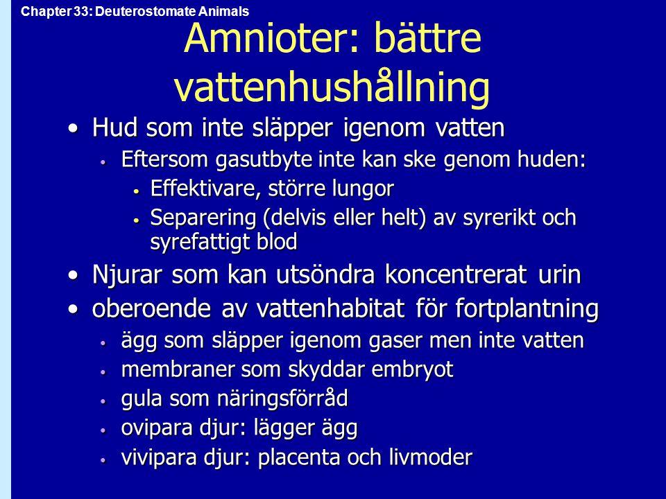 Chapter 33: Deuterostomate Animals Amnioter: bättre vattenhushållning Hud som inte släpper igenom vattenHud som inte släpper igenom vatten Eftersom ga