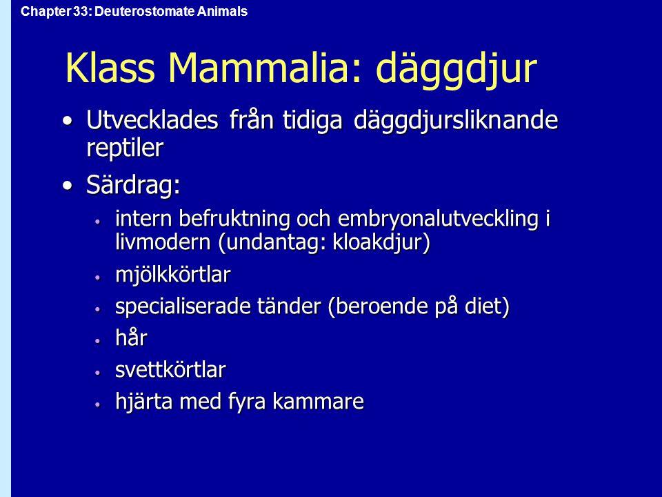 Chapter 33: Deuterostomate Animals Klass Mammalia: däggdjur Utvecklades från tidiga däggdjursliknande reptilerUtvecklades från tidiga däggdjursliknand