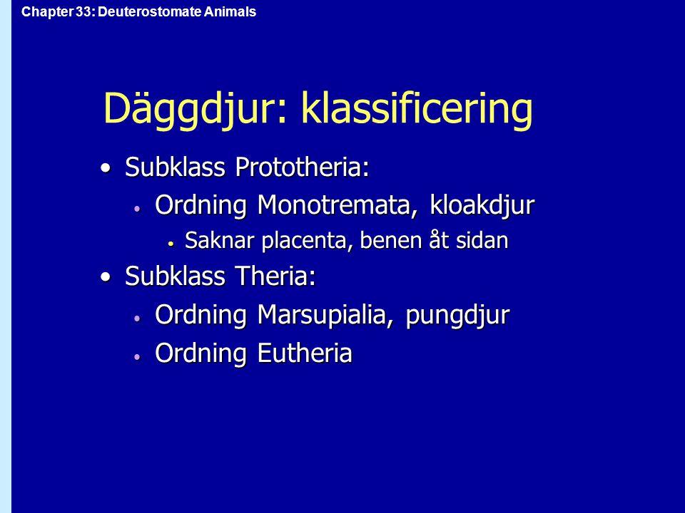 Chapter 33: Deuterostomate Animals Däggdjur: klassificering Subklass Prototheria:Subklass Prototheria: Ordning Monotremata, kloakdjur Ordning Monotrem