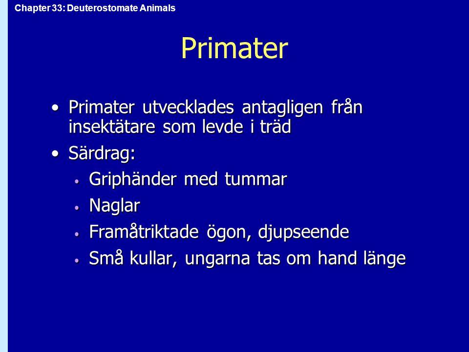 Chapter 33: Deuterostomate Animals Primater Primater utvecklades antagligen från insektätare som levde i trädPrimater utvecklades antagligen från inse