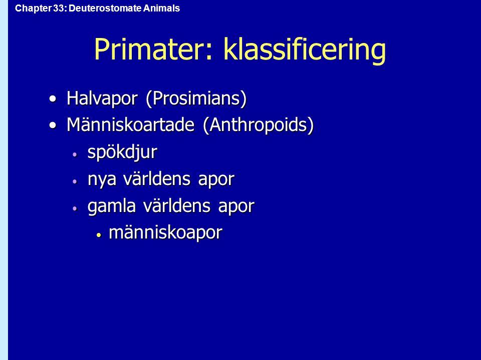 Chapter 33: Deuterostomate Animals Primater: klassificering Halvapor (Prosimians)Halvapor (Prosimians) Människoartade (Anthropoids)Människoartade (Ant