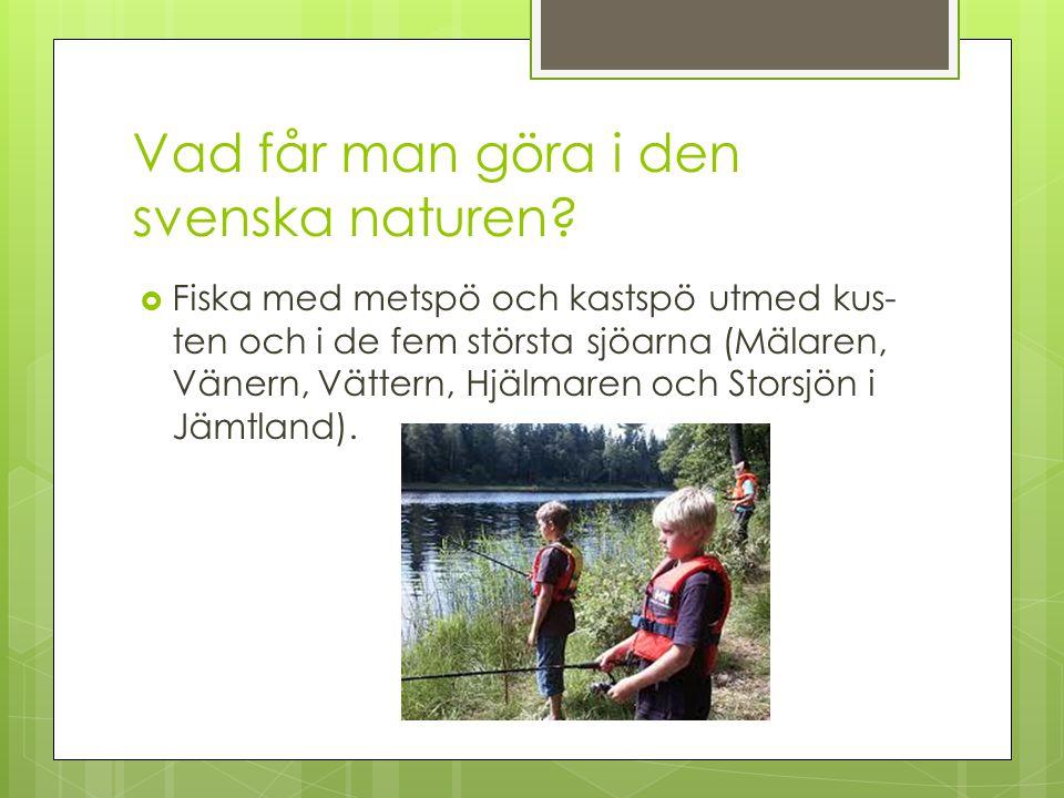 Vad får man göra i den svenska naturen?  Fiska med metspö och kastspö utmed kus ten och i de fem största sjöarna (Mälaren, Vänern, Vättern, Hjälmare