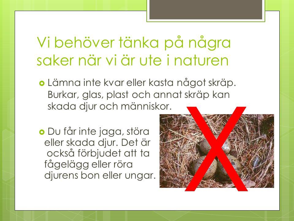 Vi behöver tänka på några saker när vi är ute i naturen  Lämna inte kvar eller kasta något skräp. Burkar, glas, plast och annat skräp kan skada djur