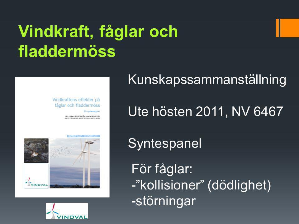 """Vindkraft, fåglar och fladdermöss Kunskapssammanställning Ute hösten 2011, NV 6467 Syntespanel För fåglar: -""""kollisioner"""" (dödlighet) -störningar"""