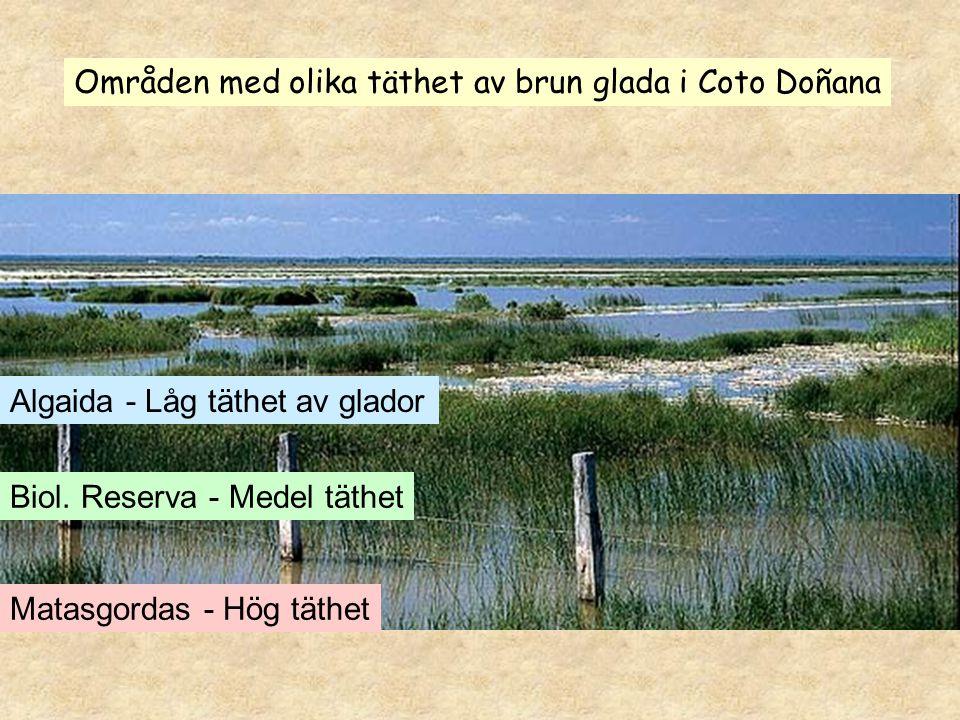Algaida - Låg täthet av glador Matasgordas - Hög täthet Biol. Reserva - Medel täthet Områden med olika täthet av brun glada i Coto Doñana