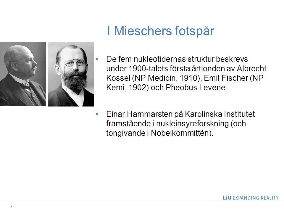 I Mieschers fotspår De fem nukleotidernas struktur beskrevs under 1900-talets första årtionden av Albrecht Kossel (NP Medicin, 1910), Emil Fischer (NP Kemi, 1902) och Pheobus Levene.