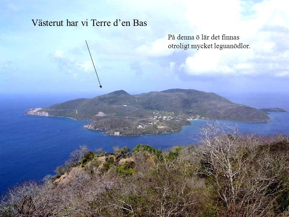 Västerut har vi Terre d'en Bas På denna ö lär det finnas otroligt mycket leguanödlor.