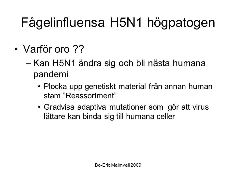 Bo-Eric Malmvall 2009 Fågelinfluensa H5N1 högpatogen Varför oro ?? –Kan H5N1 ändra sig och bli nästa humana pandemi Plocka upp genetiskt material från