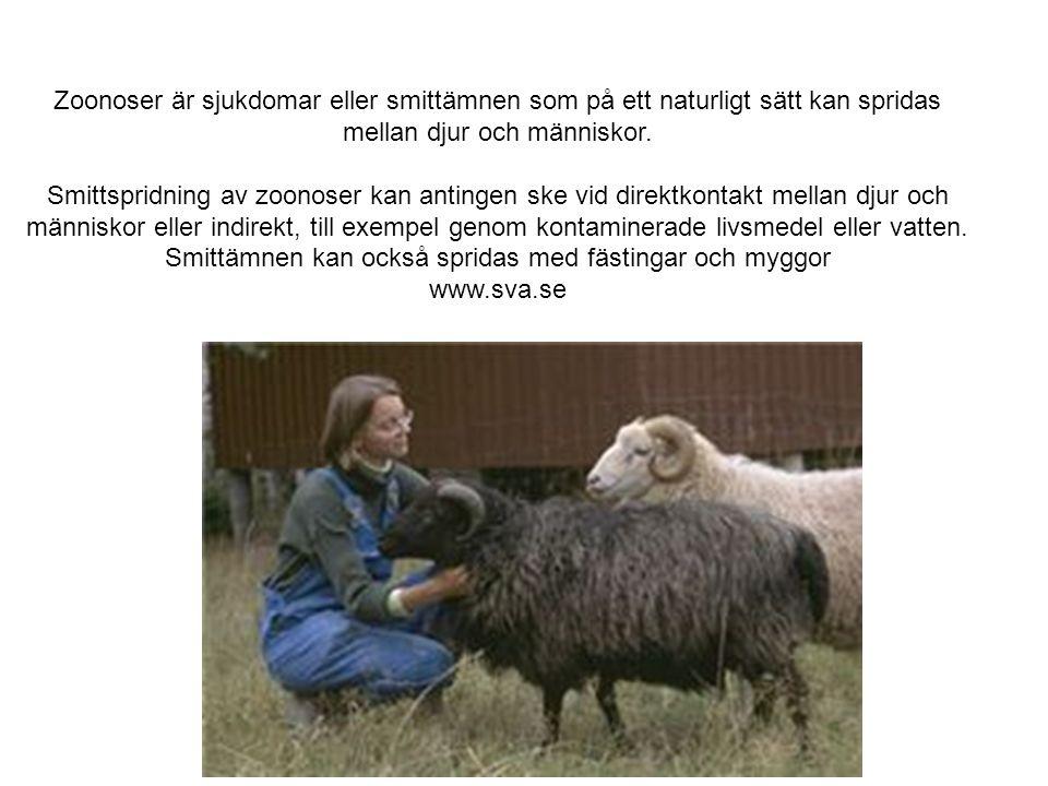 Bo-Eric Malmvall 2009 Ockelbosjukan - lokal virusinfektion Gästrikland, Hälsingland och Dalarna, Personer - lingonplockare.