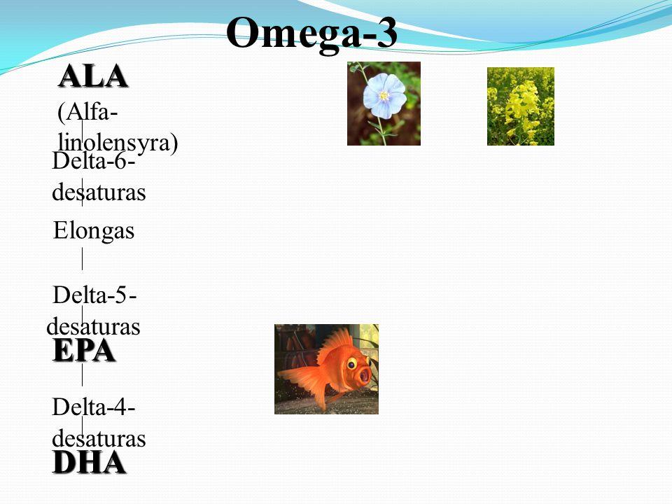Omega-3 ALA ALA (Alfa- linolensyra) Delta-6- desaturas Elongas Delta-5- desaturas EPA Delta-4- desaturas DHA