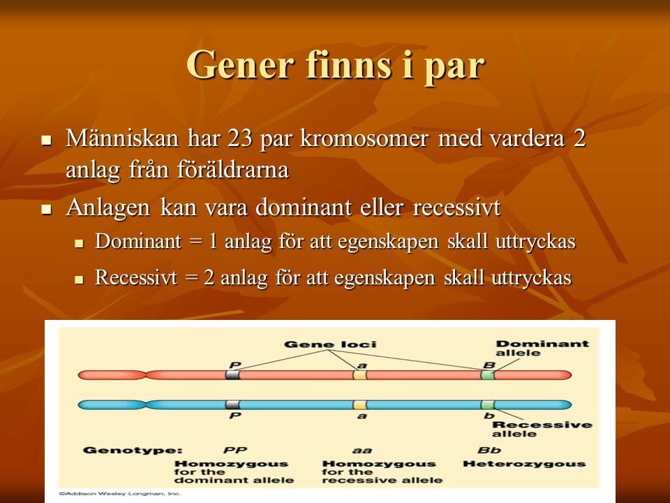 Gener finns i par Människan har 23 par kromosomer med vardera 2 anlag från föräldrarna Människan har 23 par kromosomer med vardera 2 anlag från föräldrarna Anlagen kan vara dominant eller recessivt Anlagen kan vara dominant eller recessivt Dominant = 1 anlag för att egenskapen skall uttryckas Dominant = 1 anlag för att egenskapen skall uttryckas Recessivt = 2 anlag för att egenskapen skall uttryckas Recessivt = 2 anlag för att egenskapen skall uttryckas